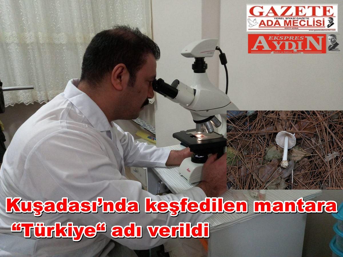 """Kuşadası'nda keşfedilen mantara """"Türkiye"""" adı verildi"""