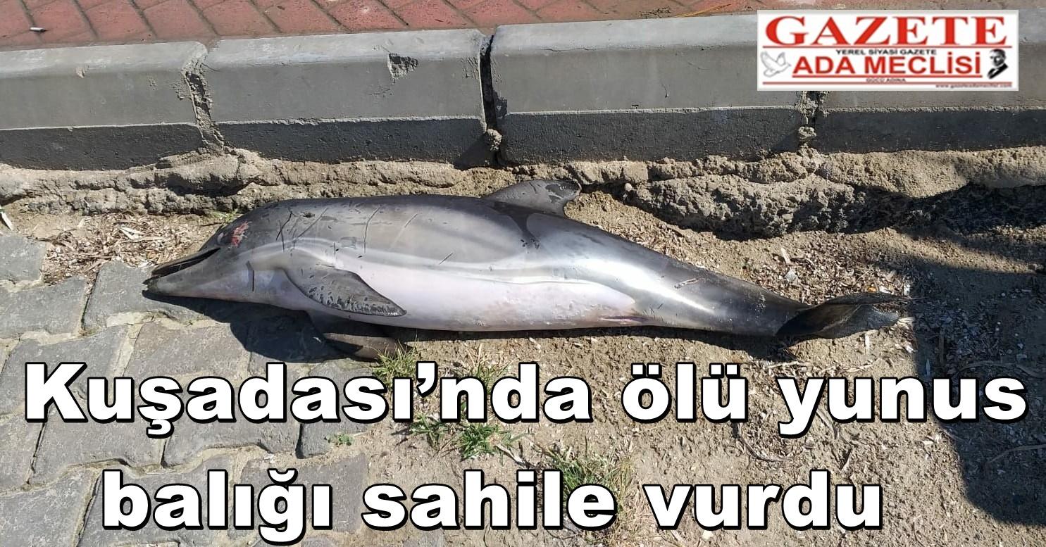 Kuşadası'nda ölü yunus balığı sahile vurdu