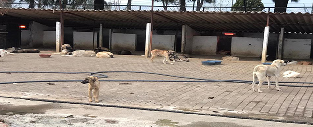 Aydın'da sokak hayvanları artık üşümeyecek